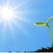 Свет для растений и животных